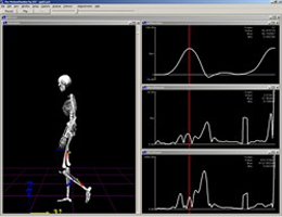 The MotionMonitor® Biomechanics Option